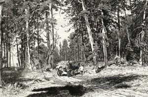 И.Шишкин. Лес